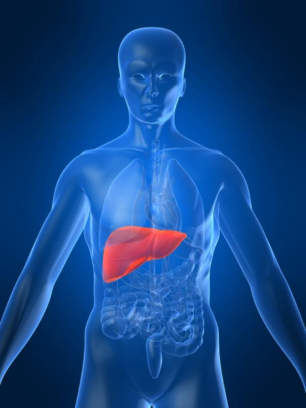 where is gallbladder locate email address
