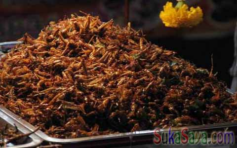 Inilah Makanan Paling Aneh Yang Berasal Dari Thailand