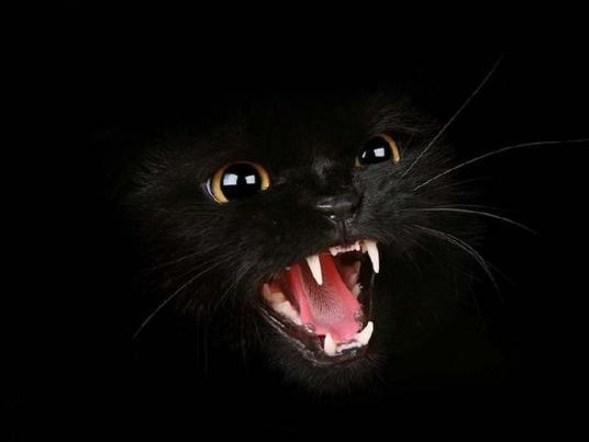Growling Black Cat