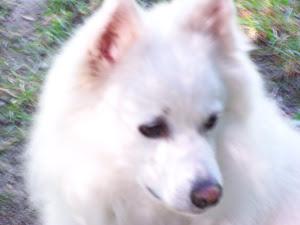 Whitey Bear