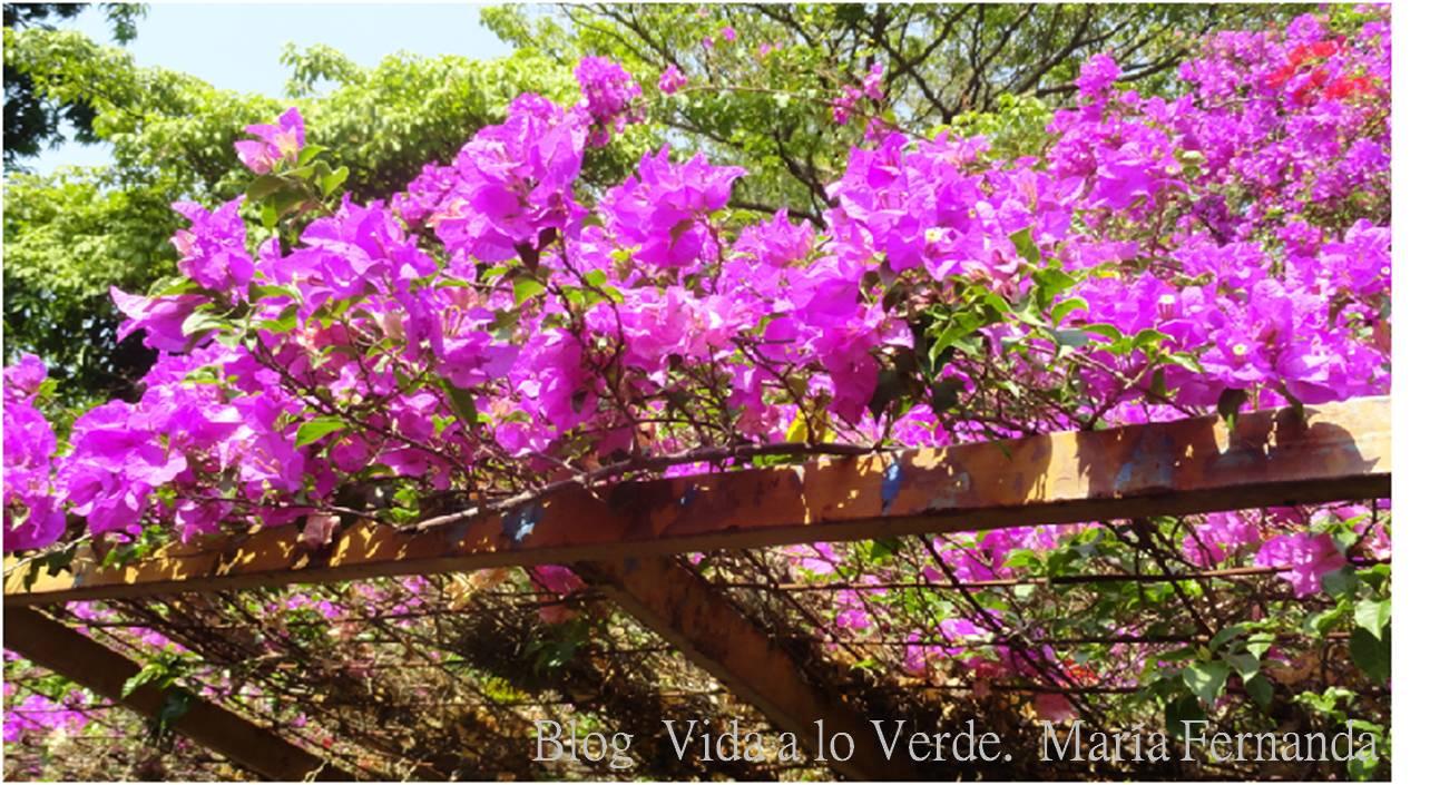 Image gallery trinitaria for Arreglar mi jardin