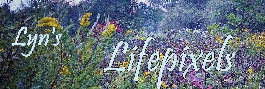 Lyn's Lifepixels