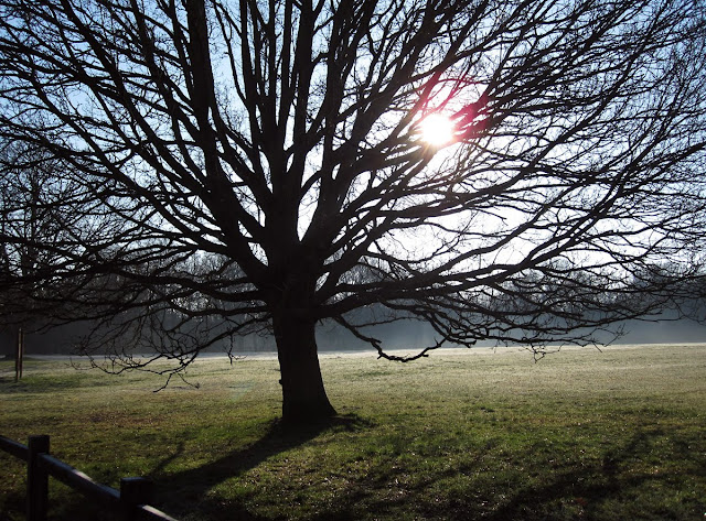 Oak tree silhouette on a frosty March morning on Hayes Common