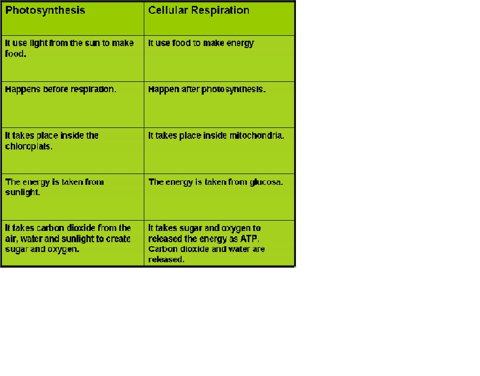 photosynthesis and cellular respiration matrix