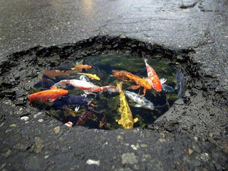 The o dot scott street pothole turned into delightful koi for How deep should a koi pond be