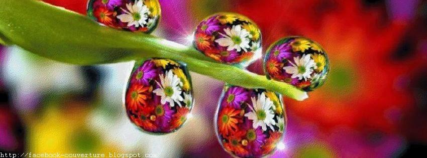 Jolie couverture facebook avec goutte d'eau sur fleur