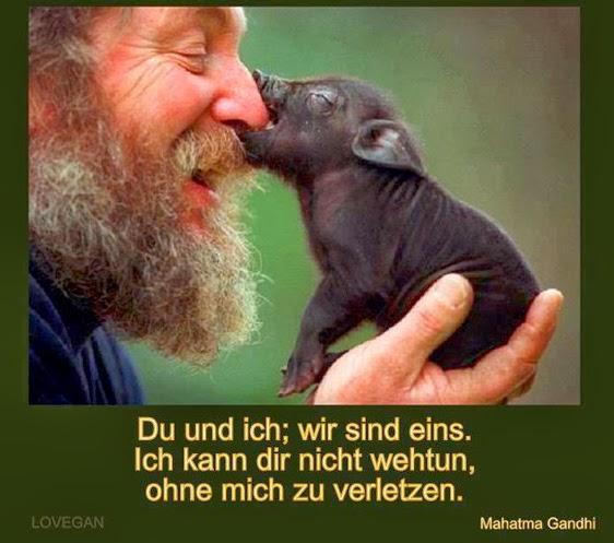 Mahatma Gandhi Zitate Tiere Leben Sprüche Zitate