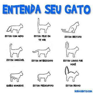 Entenda Seu Gato - Divertida imagem postada pela amiga Regina Bolico sobre as reações felinas