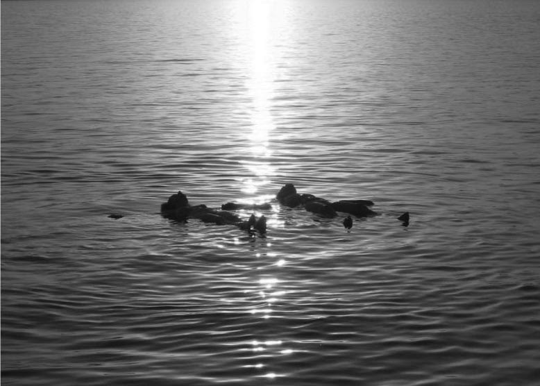 Flotar en el agua