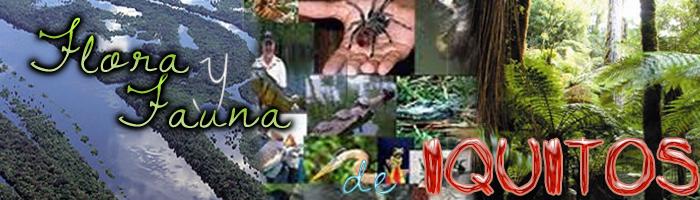 Flora y Fauna de la Ciudad de Iquitos