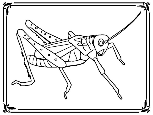 plague locust coloring pages