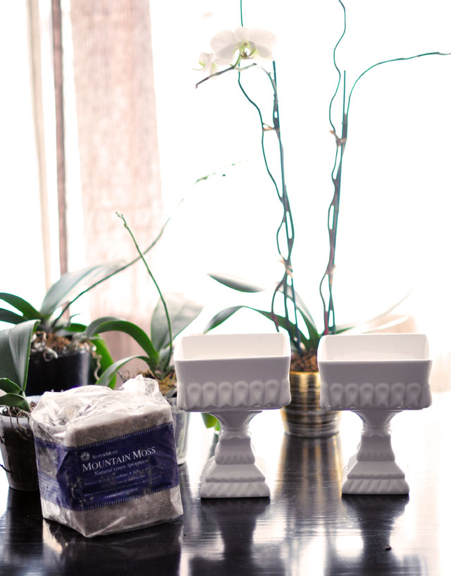 how to replant and regrow orchids