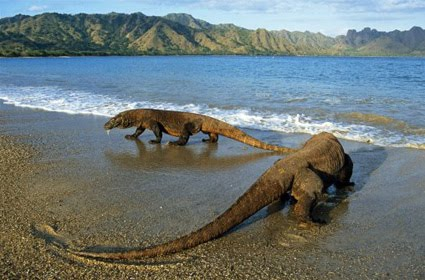 Komodo Island is the New 7 Wonders of The World