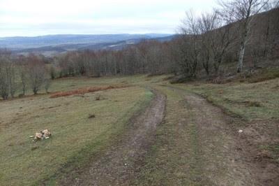 Descendemos por la herbosa colina