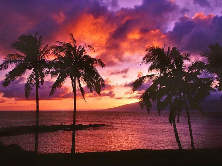 hudsonphoto Maui loretta fuddy birther report