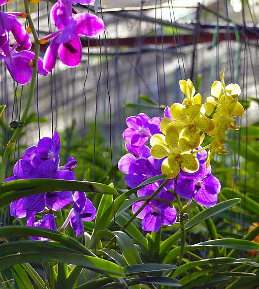 In a orchid nursery