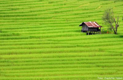 Petani Indonesia: Ketika Negara Abai
