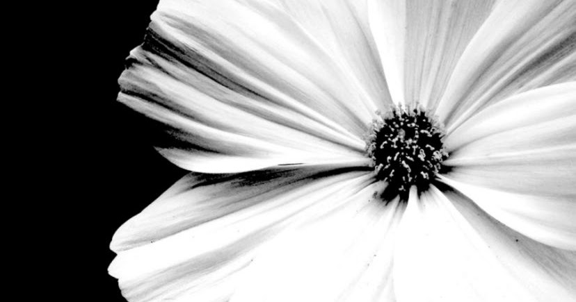 White flower black background amazing wallpapers mightylinksfo