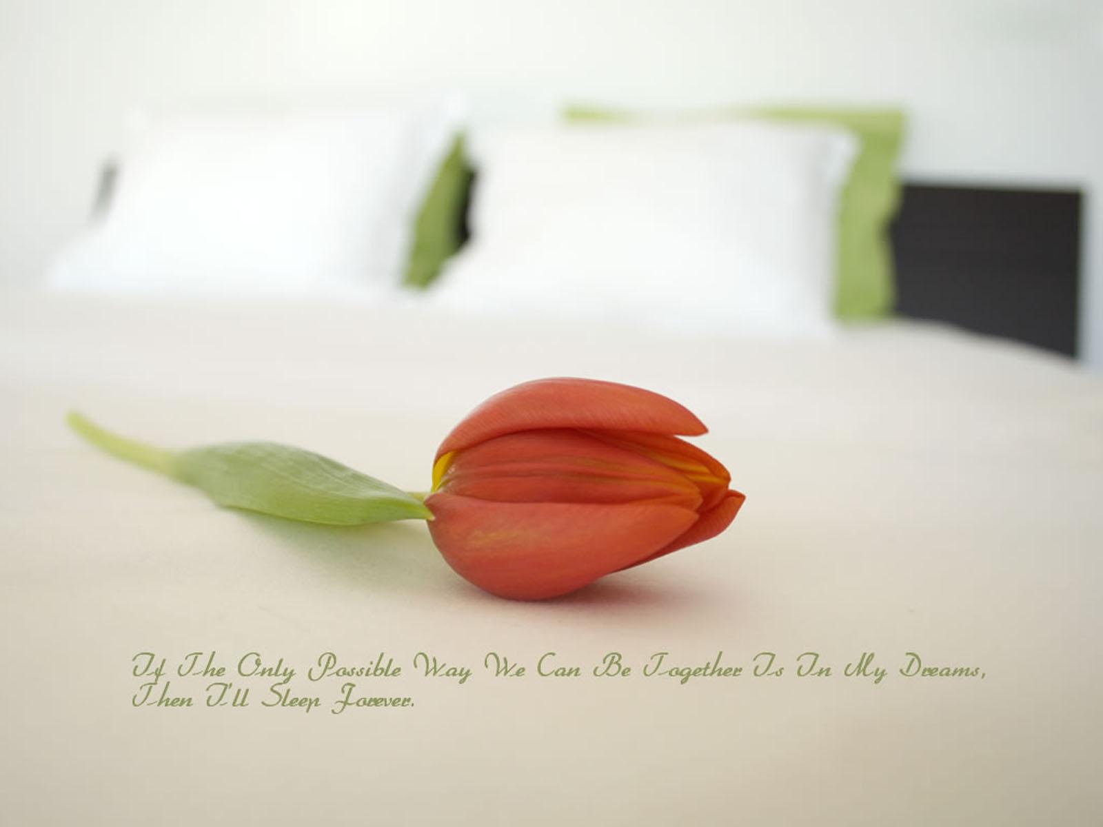 http://3.bp.blogspot.com/-WR9ZptjIRpk/T4WmmKqvGtI/AAAAAAAACA0/6lJW2H7bKp4/s1600/Love+Quotes+Wallpapers.jpg