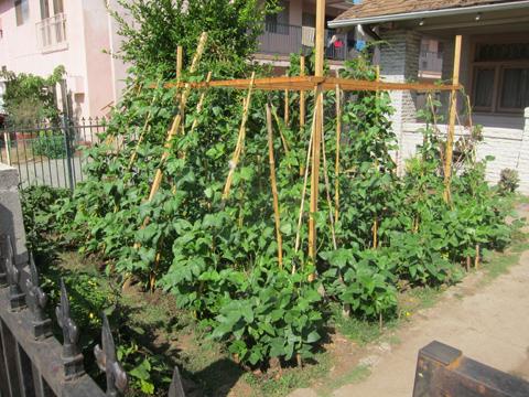 Front Yard Vegetable Garden Update Root Simple
