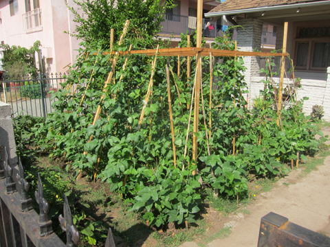 Front Yard Vegetable Garden Update Root Simple