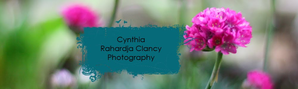 Cynthia Rahardja Clancy Photography