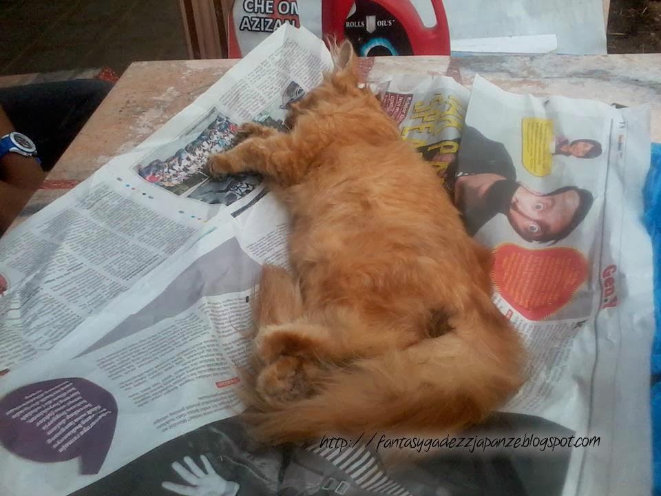 Lonely Girl Kisah Sedih Dua Beranak Meow