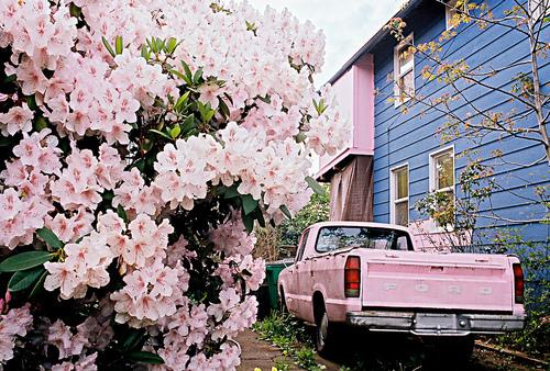 rosas no jardim de deus:Blog La Pequetita: FLORES E MAIS FLORES NO MEU CAMINHO!!!!