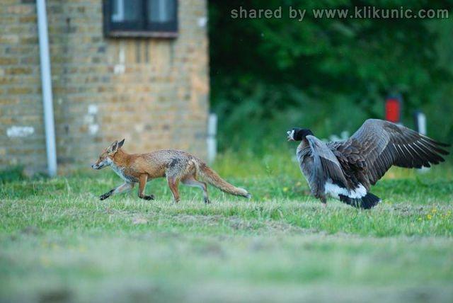 http://3.bp.blogspot.com/-WRtw_6gf-rQ/TXWBG7P8ibI/AAAAAAAAQK8/zy-2_x1rgJQ/s1600/these_funny_animals_632_640_09.jpg