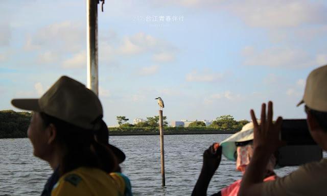 竹筏外的風景,垂手可得都可以看到飛羽的各種姿態。