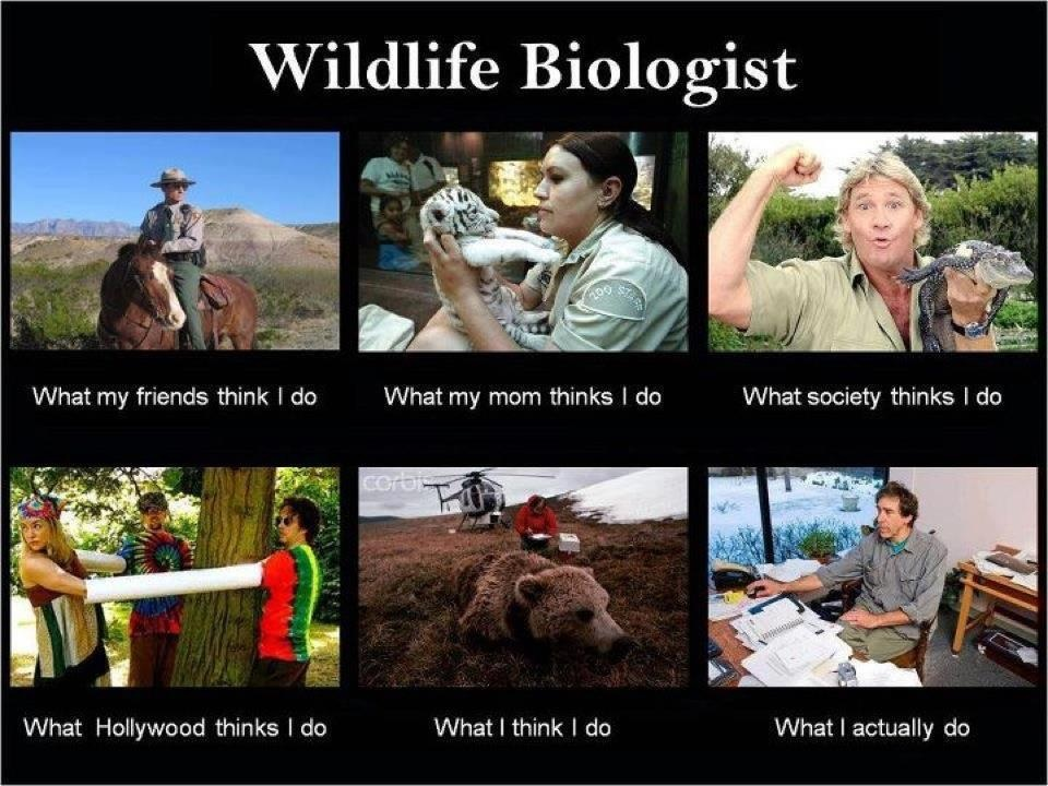 the rogue botanist  what a refuge biologist does