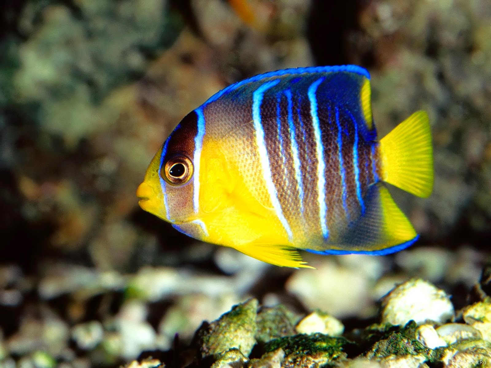 beautiful and exotic fish On exotic tropical fish