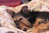 Kacey 2005 - 2015 RIP little Angel