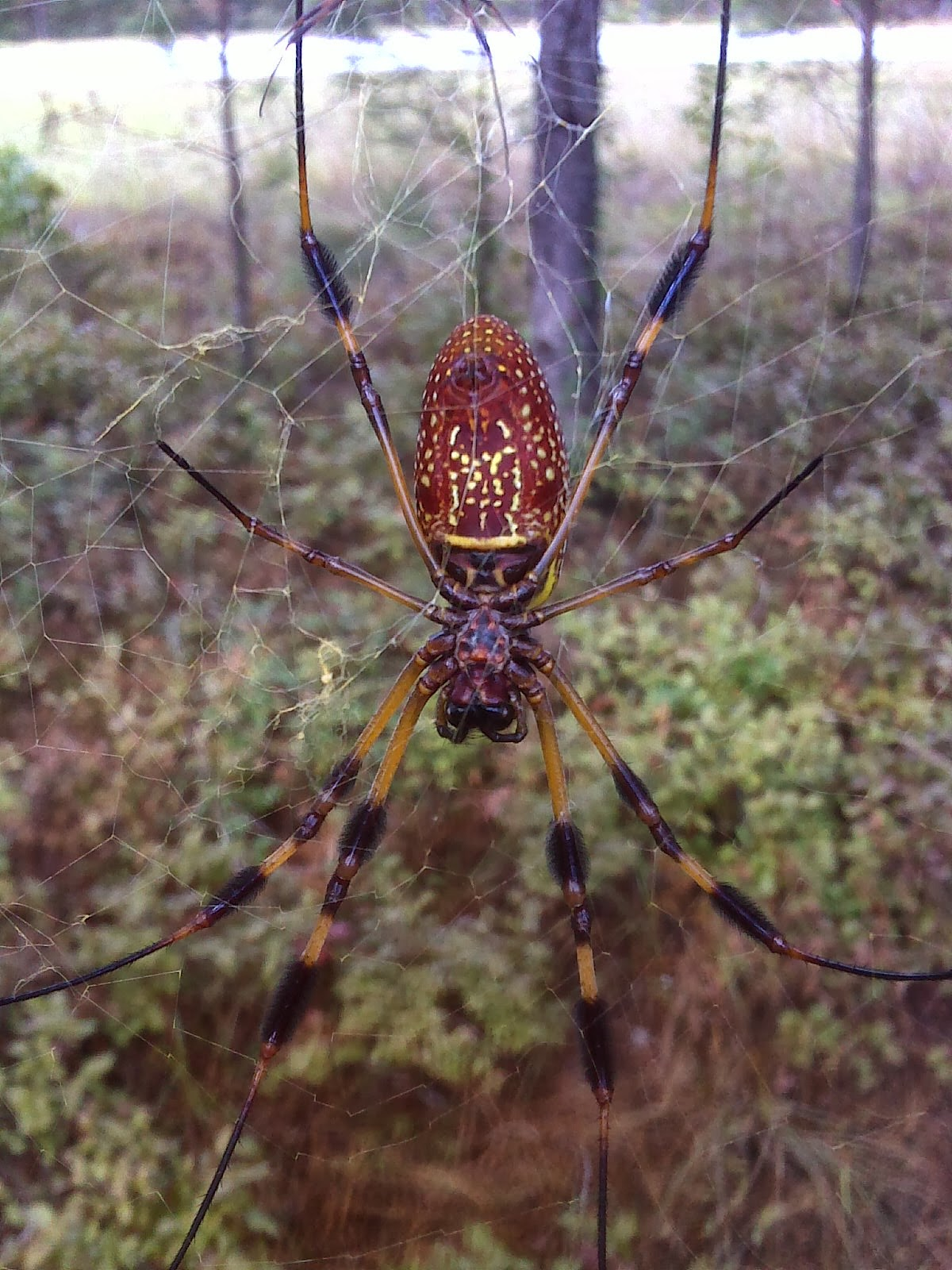 largest spider in the world - photo #32