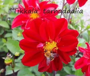 Mikkelin puutarhayhdistys