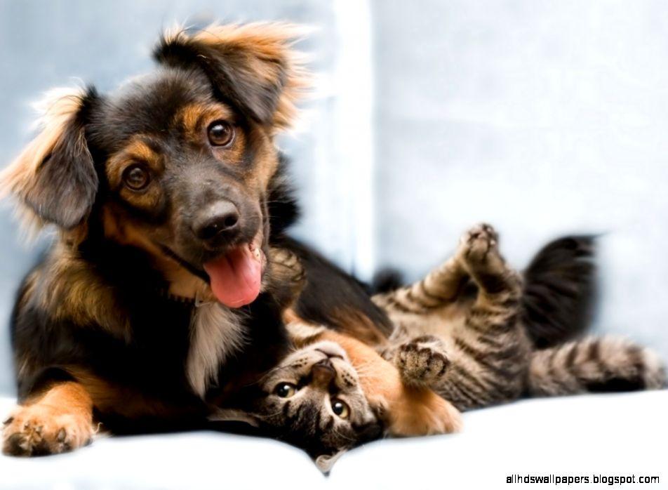 Dog And Cat Friendship HD desktop wallpaper  High Definition