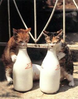 Fıkra: Kedi sütü iç. www.uykusuzissizler.com