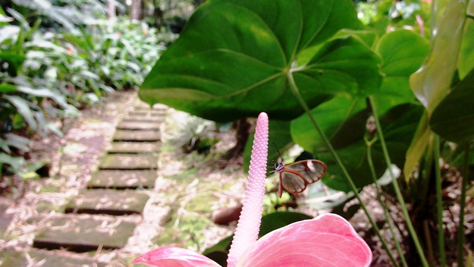 Marsella mi jardin sabias que for Jardines de anturios