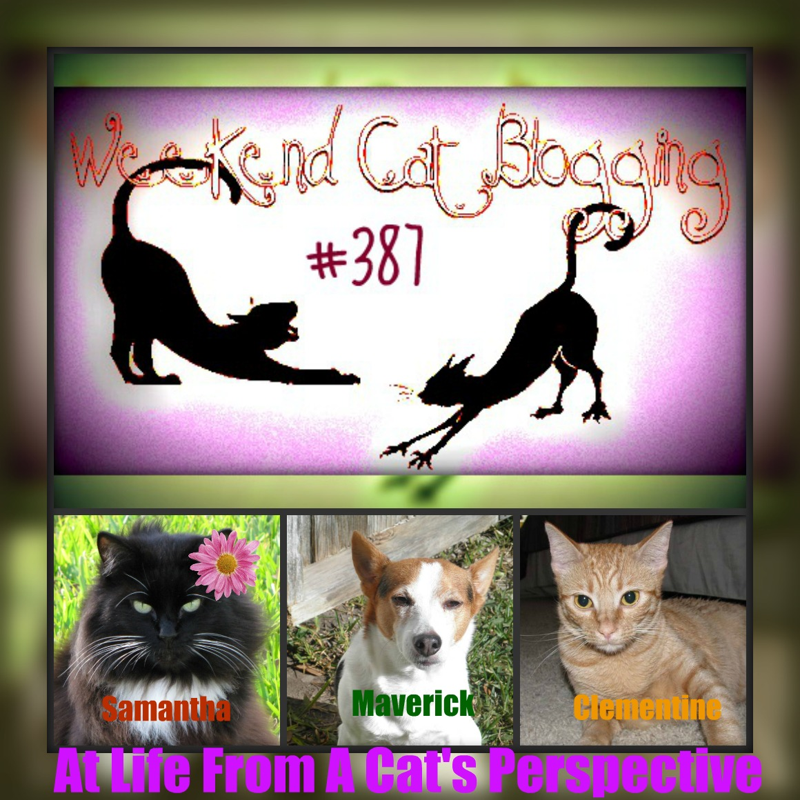 Life From A Cats Perspective Weekend Cat Blogging 387