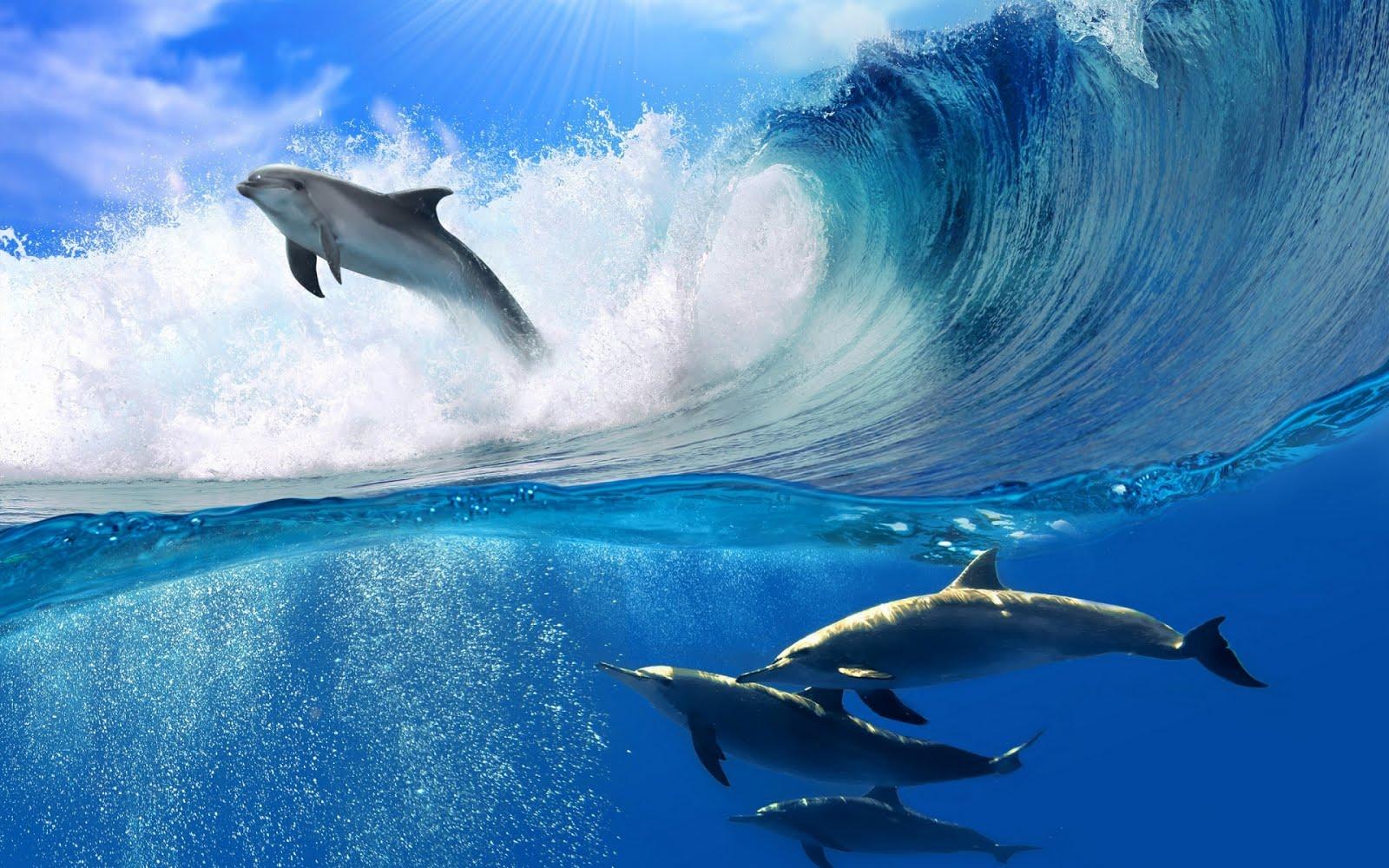 http://3.bp.blogspot.com/-WT_oTbfPTo4/UKLzRlj82DI/AAAAAAABQHI/hs0fUsvMKv0/s1600/delfines-nadando-en-el-mar-dolphins-swimming-1920x1200-wallpaper.jpg