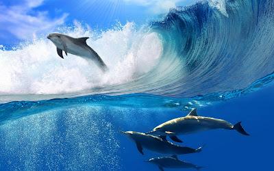 Delfines nadando en el mar