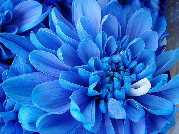 Romantic Flowers Exotic Flowers
