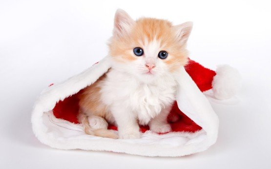 Foto Kucing Lucu Imut dan Menggemaskan 19