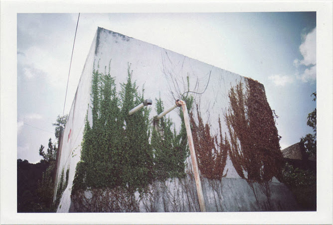 dirty photos - time - cretan landscape photo of brown and grey tree leaves on wall