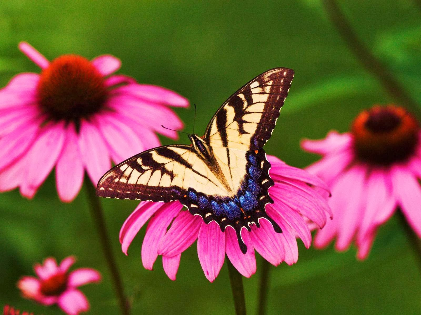 Symbiotic Relationship Of Butterfly And Flower