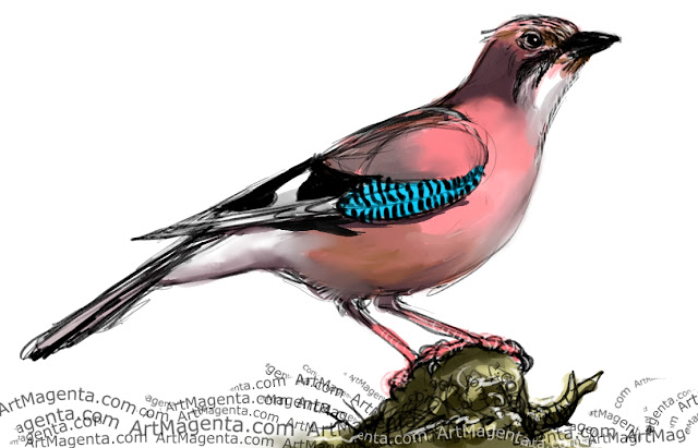 Jay sketch painting. Bird art drawing by illustrator Artmagenta.