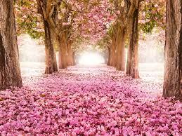 Doux printemps...