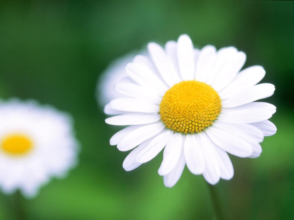Flowers Amazing Stuffs