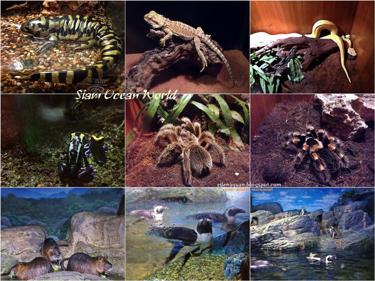 Cuisine Paradise Singapore Food Blog Recipes Reviews And Travel Thailand Et Ticket Sea Life Ocean World Aquarium Only Adult Siam Zone 4 Rainforest 5 Rocky Shore
