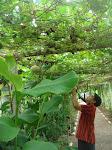 อุโมงค์ผักของโรงเรียนอนุบาลราชบุรี